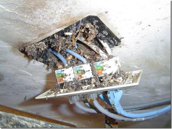 Network wiring 001